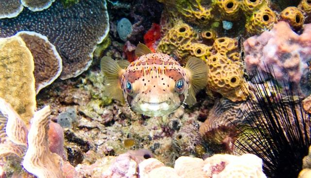 cozumel-arrecife