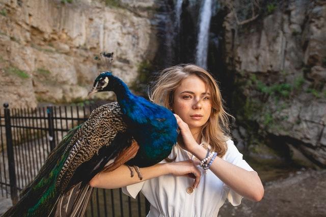 peacocks-as-pets-love